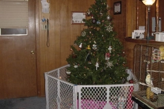 CHRISTMASTREE2002